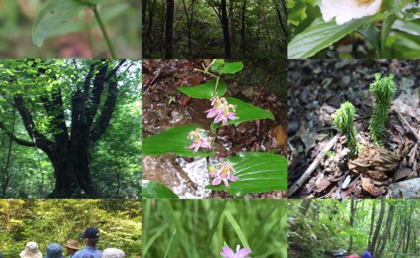 自然セラピー&自然観察体験会